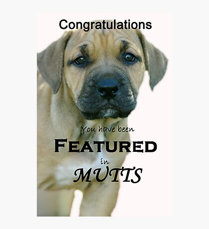 Banner for Mutts group Photographic Print