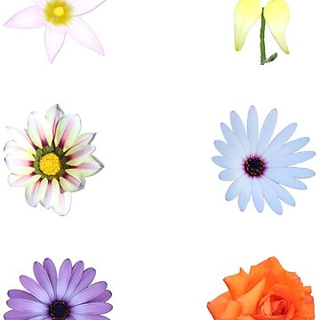 Mixture - Orange Rose, Purple Daisy, White Daisy, Cowslip Orchid by STHogan