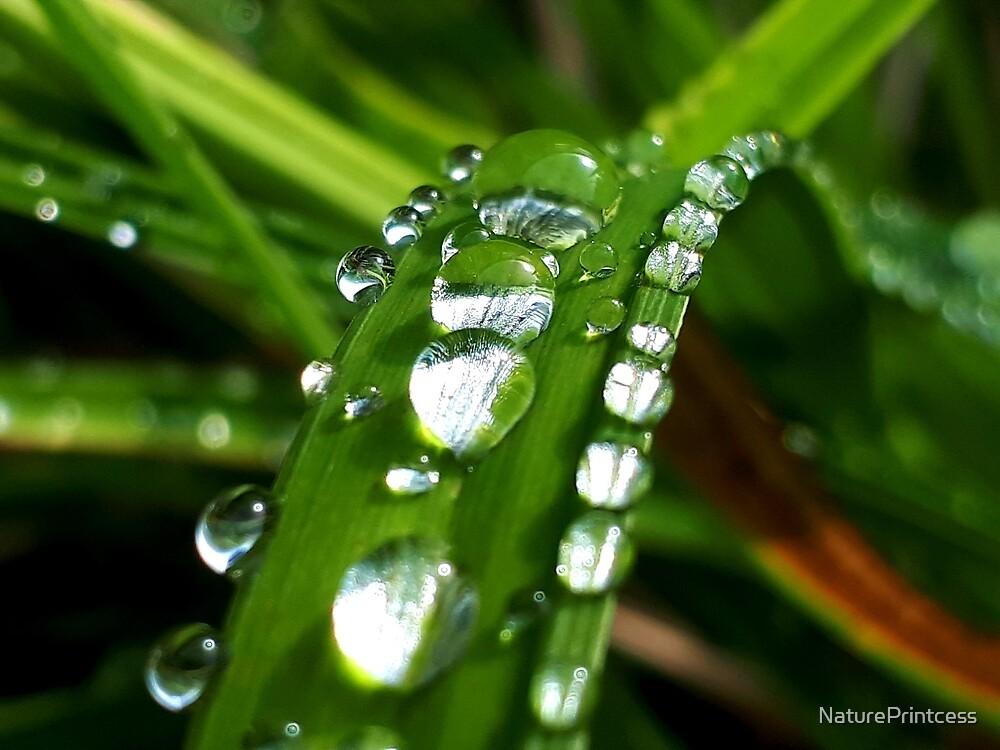 Little rain christalls by NaturePrintcess