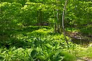Green Landscape of Summer Foliage by MotherNature