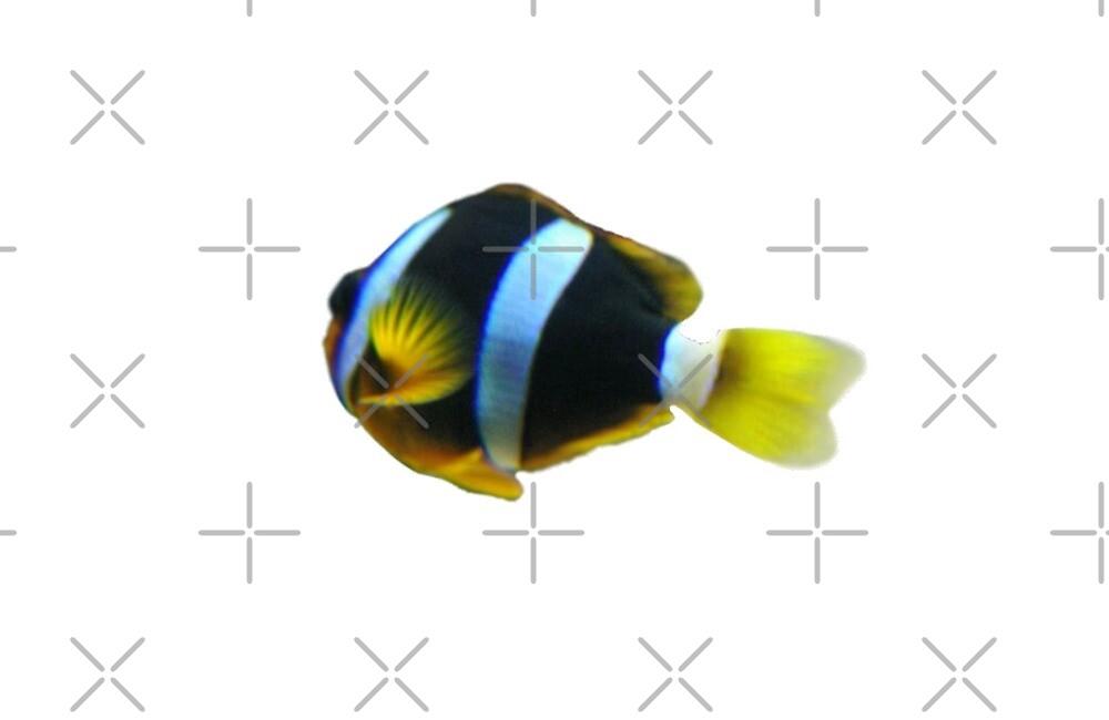clownfish by ASTAUFF23
