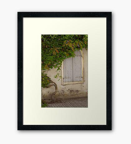 Blue Shutters, green vine Framed Print