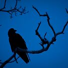 Morning Raven by Marty Samis