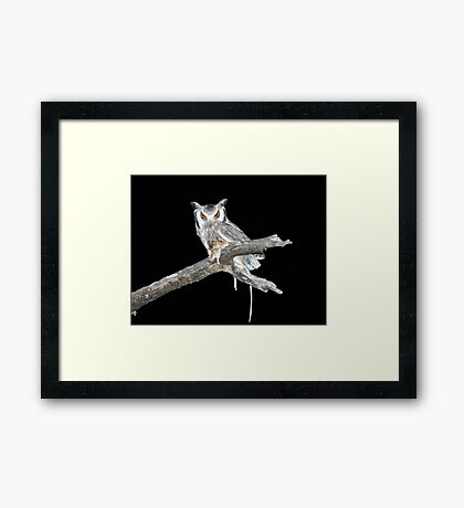 Southern White Faced Owl Framed Print