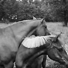 horses by deadbilly