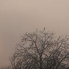 The Raven by Aleksandar Topalovic