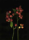 Berries by Barbara Wyeth