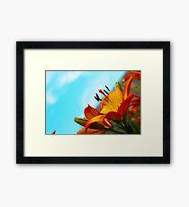 Garden Lily 3 Framed Print
