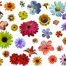 buntes Blumenmeer von rhnaturestyles