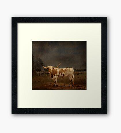 Texas Long Horn Framed Print