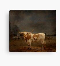 Texas Long Horn Canvas Print