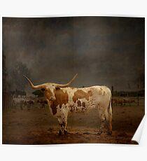 Texas Long Horn Poster
