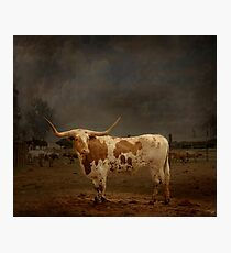 Texas Long Horn Photographic Print