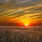 Sunrise over seedheads by Geoff Carpenter