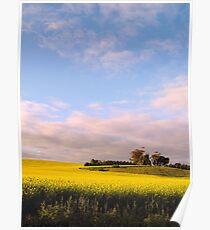 Lifting a Wilting Spirit - Canola Blossoms Around Saddleworth Church Poster