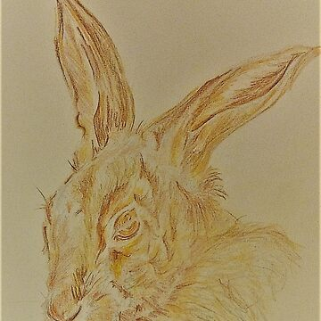 Brown Hare by JacquesArt