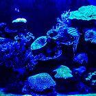 Aqua Blue - Ocean Floor by DPalmer