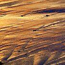 Liquid Gold by Lynda Kerr