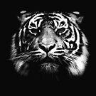 Illustrated Tiger  by Wayne Gerard Trotman