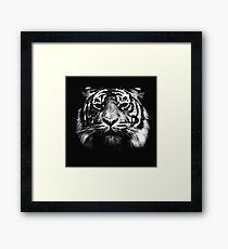 Illustrated Tiger  Framed Print