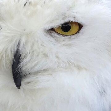 Portrait of Snowy Owl by trish725