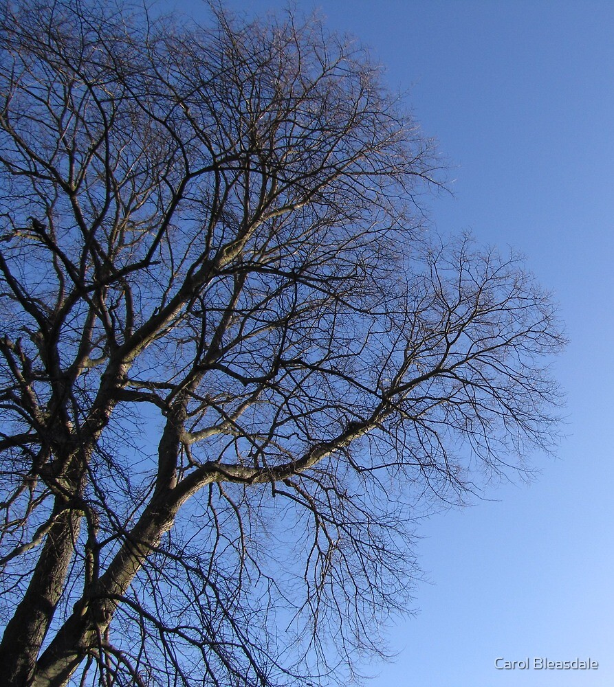 Bare and Blue by Carol Bleasdale
