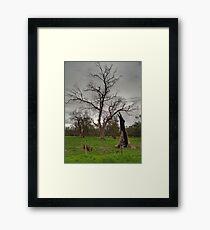 Energising Nature Framed Print