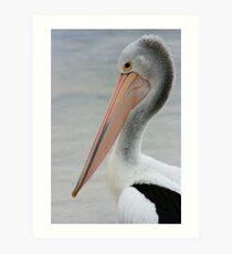 Black Point Pelican Art Print