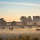 Horses in the Mist by Jim Key