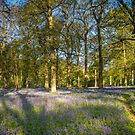 Walk through the Bluebells by Jim Key