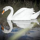 Swan by JEZ22