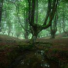 Fangorn by Michael Breitung