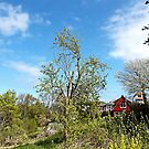 An der Ostsee übern Gartenzaun von voelzis