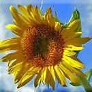 Blue sky Sunflower by SERENA Boedewig