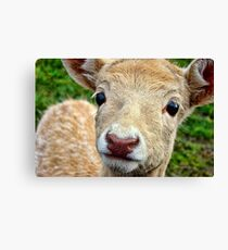 Young Fallow Deer Canvas Print