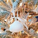 Seashell Christmas by Maria Dryfhout