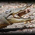 Croc Trotter by tracyleephoto