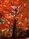 Autumn Impressions 7 by NatureGreeting Cards ©ccwri