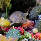 winter mouse on a pile of nuts and berries  by Simon-dell