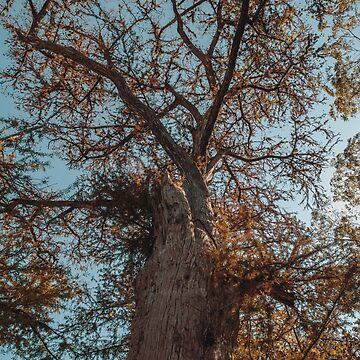 Beautiful tree at Guadalupe River State Park by cheesim