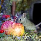 wild house mouse  with a apple by Simon-dell