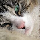 Bobby the Cat Mid-Snooze by sienebrowne