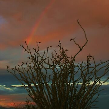 Ocotillo Rainbow by lenzart