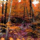 Colors of Fall on Ramapo Mountain, North New Jersey by Jane Neill-Hancock