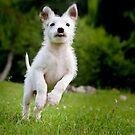 Hund . Straßenhund - Ella  von laura-S