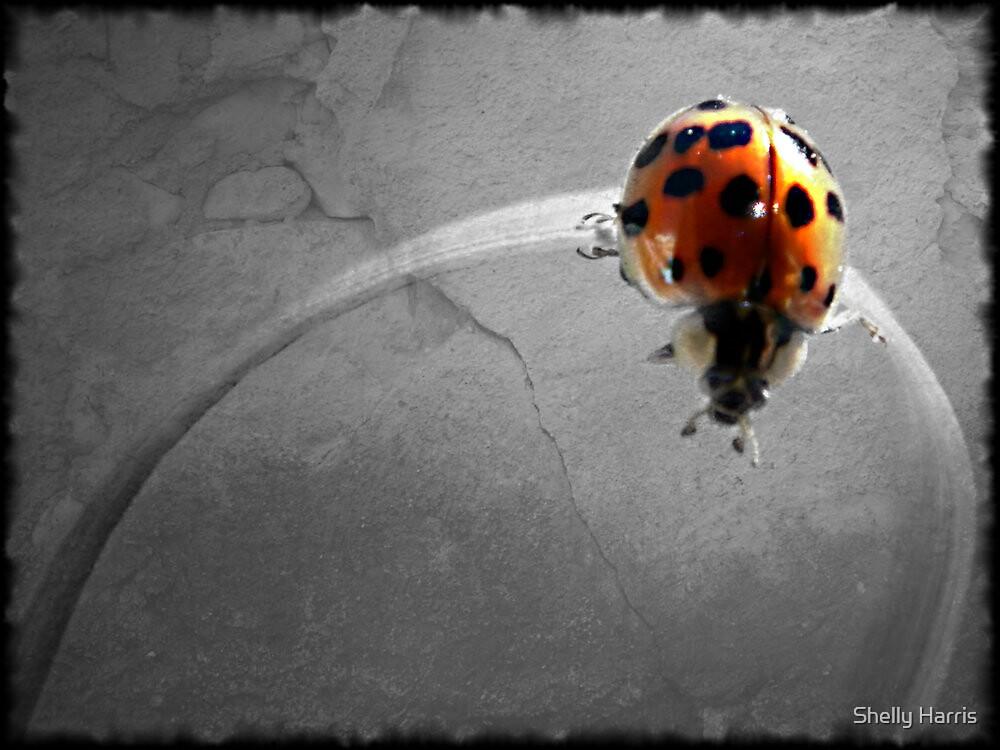 Ladybug Grunge by Shelly Harris