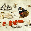 Butterfly, Caterpillar, Moth, Insects, and Currants by Cynthia Staples