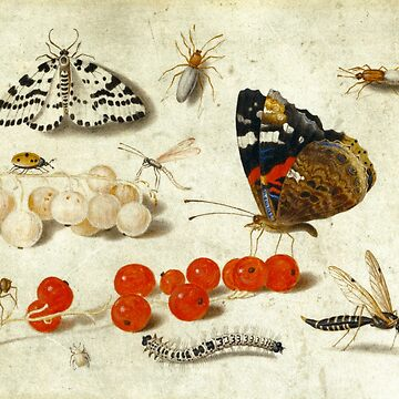 Butterfly, Caterpillar, Moth, Insects, and Currants by elaine226