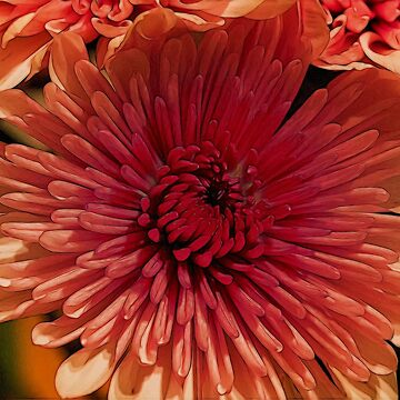 Artistic Flower by Violaman