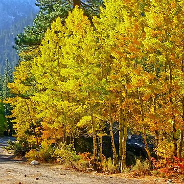 AUTUMN'S CALIFORNIA GOLD  by elainebawden